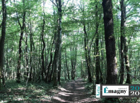 Sauvons notre forêt : le Maire interpelle l'ONF et le SIGF des Grands Bugnoz sur la gestion de la forêt
